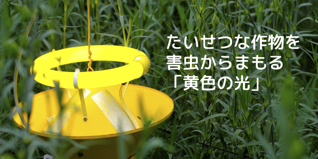たいせつな作物を害虫からまもる「黄色の光」